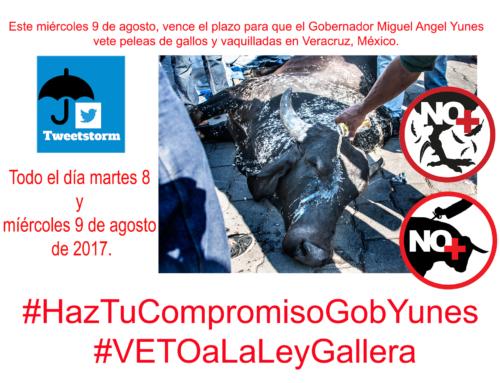 VENCE EL PLAZO PARA QUE MIGUEL ANGEL YUNES #VETEaLaLeyGallera