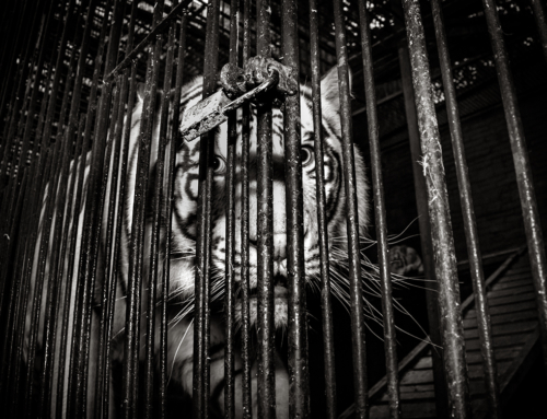 El comercio ilegal de animales silvestres es casi igual de preocupante y poco ético que el comercio legal